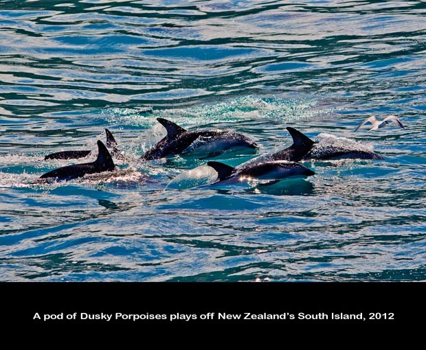 NZ040-Whale-Porpoise-Watching_NZ-1525