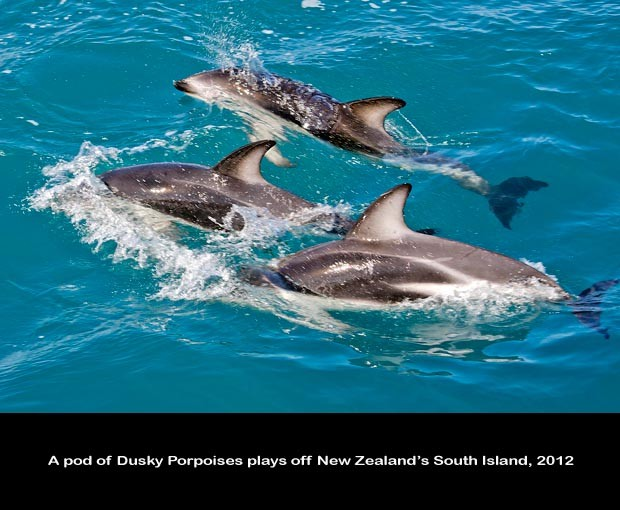 NZ041-Whale-Porpoise-Watching_NZ-1546-C