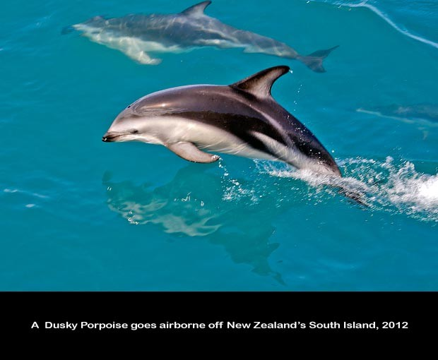 NZ042-Whale-Porpoise-Watching_NZ-1558-C