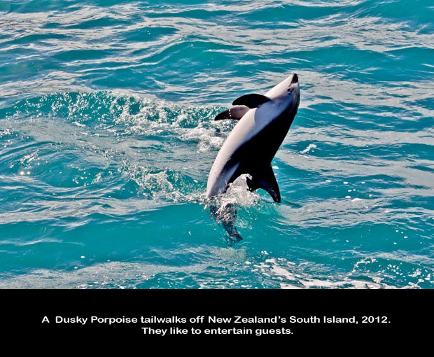 NZ043-Whale-Porpoise-Watching_NZ-1524-C